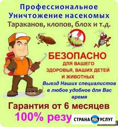 Уничтожение клопов тараканов клещей блох муравьёв Калининград