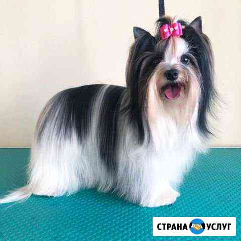 Стрижка собак Новосибирск