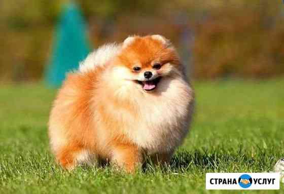 Передержка собак. Бесплатно Стерлитамак