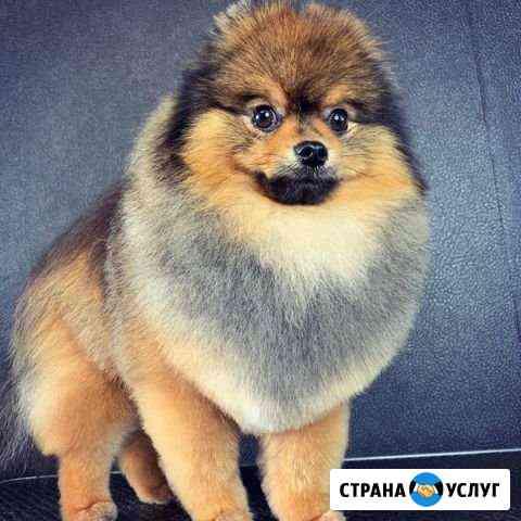 Стрижка собак и кошек (груминг) Комсомольск-на-Аму Комсомольск-на-Амуре