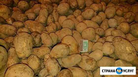 Картошка своя привезу Новочебоксарск