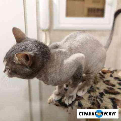 Стрижка собак и кошек, экспресс линька у Вас дома Волгоград