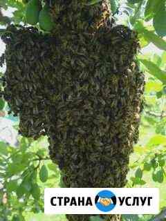 Сниму рой пчел Кармаскалы