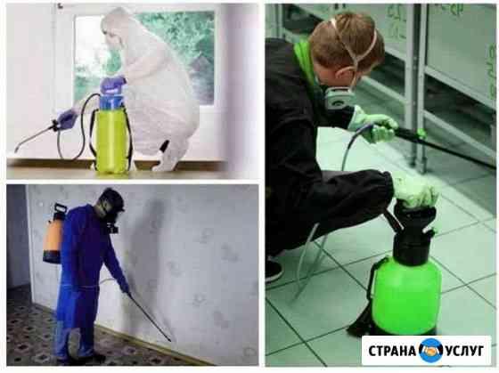 Уничтожение тараканов. Дезинсекция в квартире Северодвинск