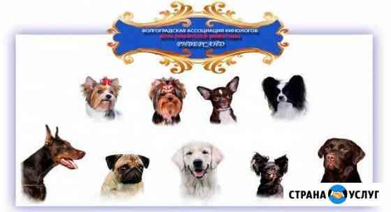 Кинологический клуб любителей собак роо вак Волгоград