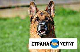 Коррекция поведения, дрессировка собак Чебоксары