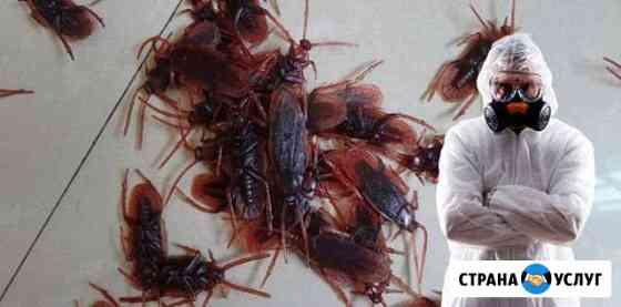 Уничтожение насекомых клопов и тараканов Междуреченск
