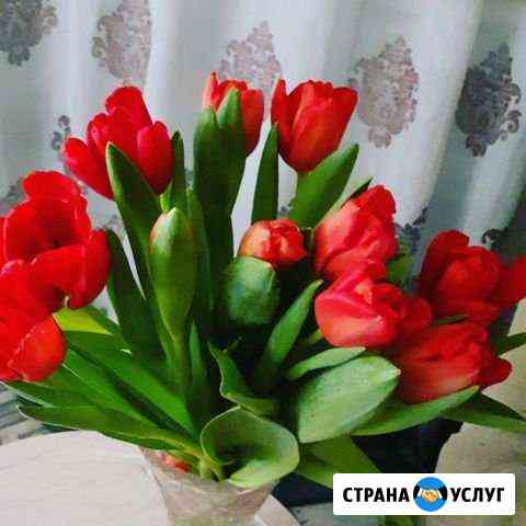 Стихи на заказ Новосибирск