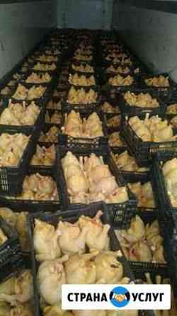 Мясо - птицы бройлеров Малка