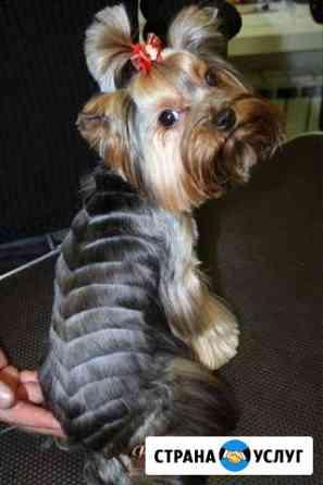 Стрижка йорков, собак не круп пород, кошек с выезд Усолье-Сибирское