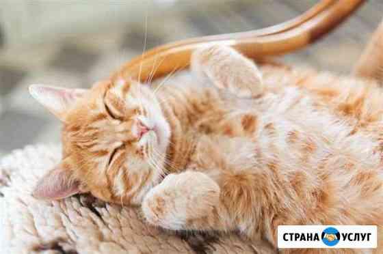 Ветеринарные услуги у вас дома Ижевск