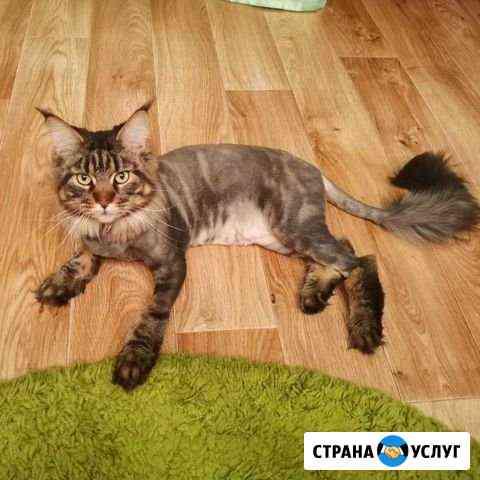Стрижка кошек (с выездом на дом) Кемерово