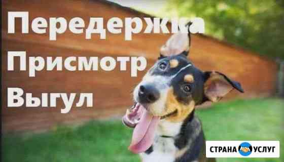 Передержка собак.Няня для вашего хвостика Киров