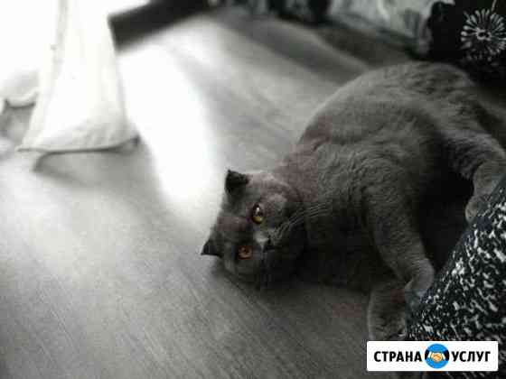 Кот на вязку Нижний Новгород