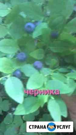 Питание Нижневартовск
