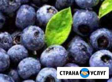Черника цена за литр Нижний Новгород
