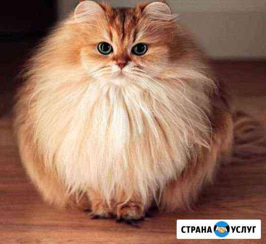 Передержка кошек Мурманск