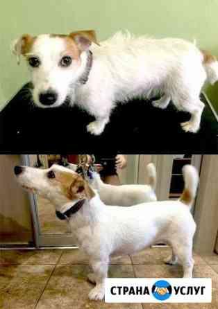 Тримминг жесткошерстных собак Конаково