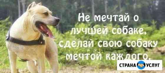 Дрессировка собак Петрозаводск