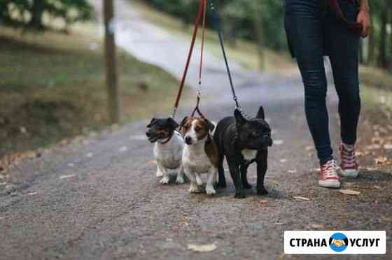Выгул собак Чебоксары