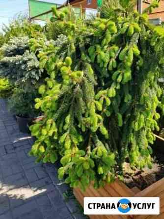 Продажа растений Липецк