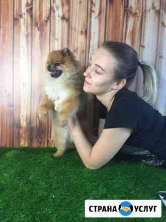 Стрижка собак и кошек Саратов