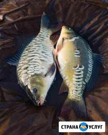Рыбалка и отдых в Липецкой области Красное