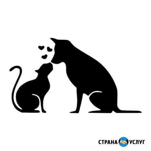 Стерилизация кошек и собак Симферополь