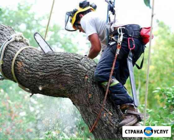 Спил деревьев, кронирование Смоленск