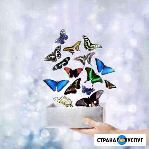 Свадебный салют из живых тропических бабочек Нижний Одес