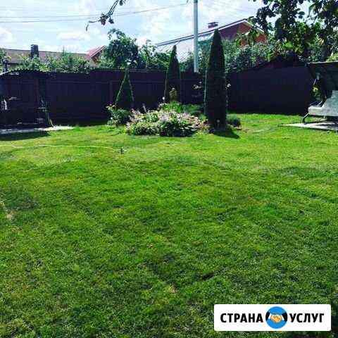 Озеленение. Ландшафтный дизайн. Рулонный газон Чебоксары