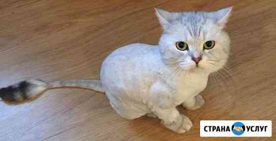 Стрижка котов Уфа
