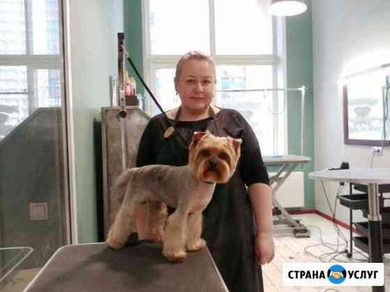 Стрижка собак и кошек в Краснокамске Краснокамск