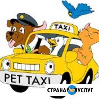 Перевозка домашних питомцев Волгоград
