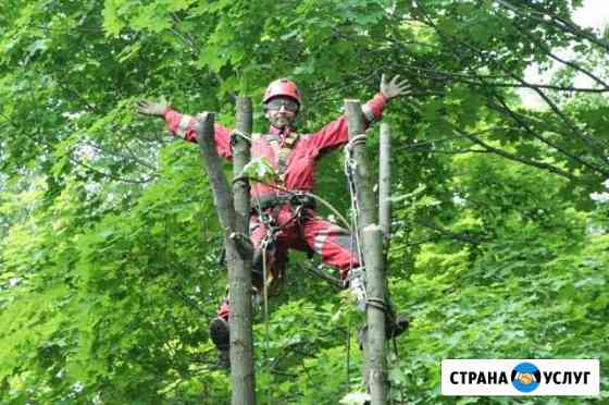 Спил и обрезка деревьев Рязань