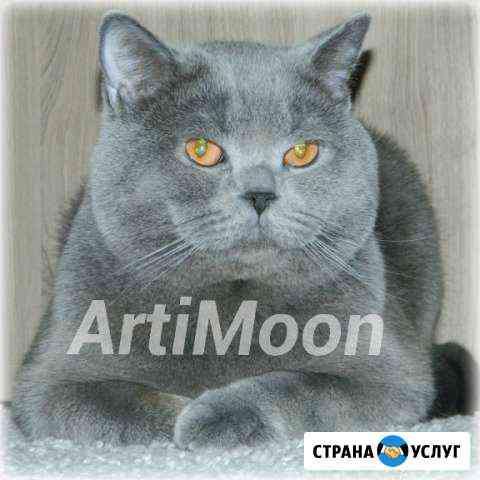 Опытный кот (SCS), познакомится с киской (SFS) Новосибирск
