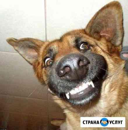 Дрессировка собак Криводановка