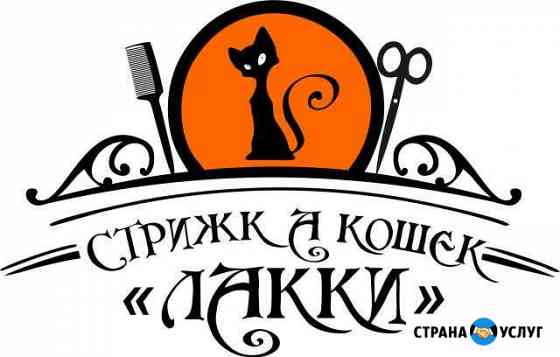 Стрижка кошек Бийск