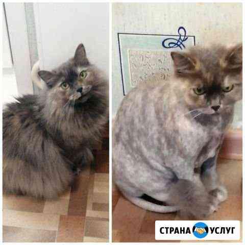 Стрижка кошек Красноярск