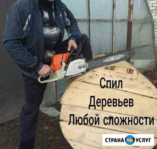 Спил деревьев Баксан