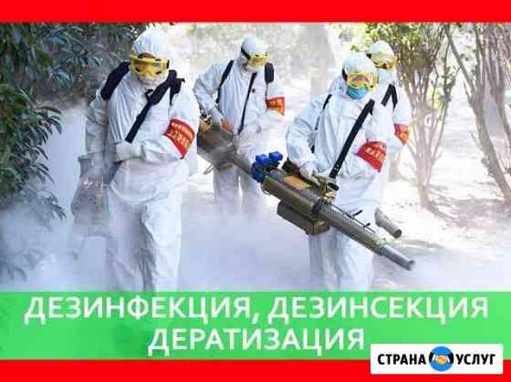 Уничтожение клопов тараканов муравьёв крыс Брянск