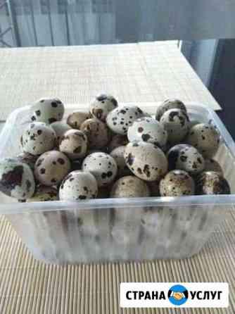Инкубационное яйцо Хабаровск