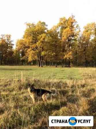 Передержка/ выгул собак Нижний Новгород