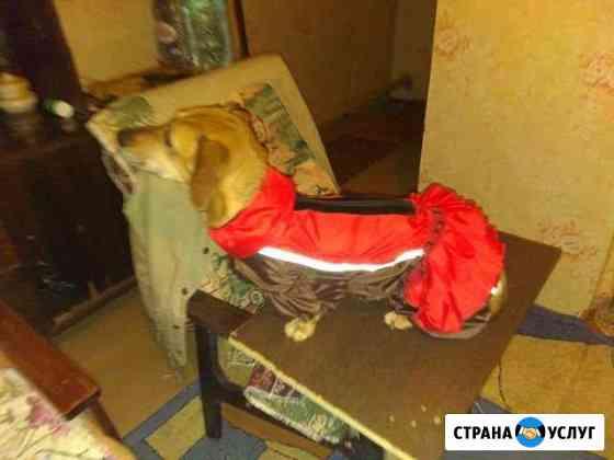 Пошив одежды для собак Орёл