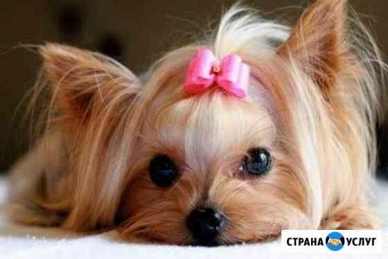 Стрижка собак мелких пород Камышин
