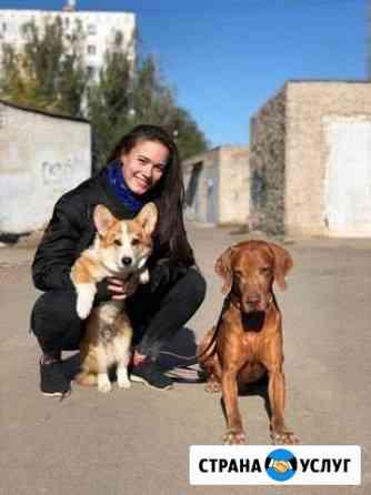 Дрессировка собак. Общий курс послушния Астрахань