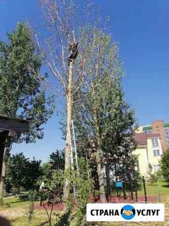 Спил деревьв Смоленск