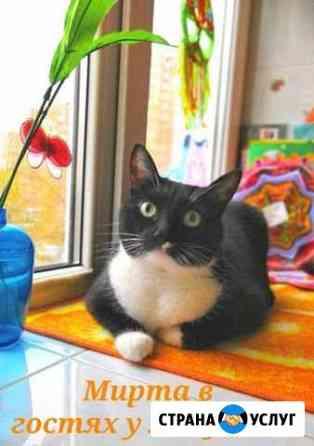 Зоогостиница передержка кошек у ветврача. Центр Уфа