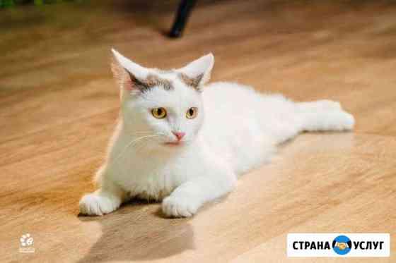 Уход и присмотр за животными (кошки) Екатеринбург