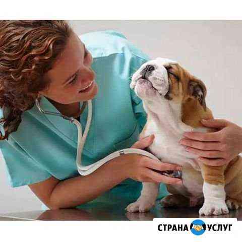 Ветеринарный врач, хирург. Выезд на дом Краснодар
